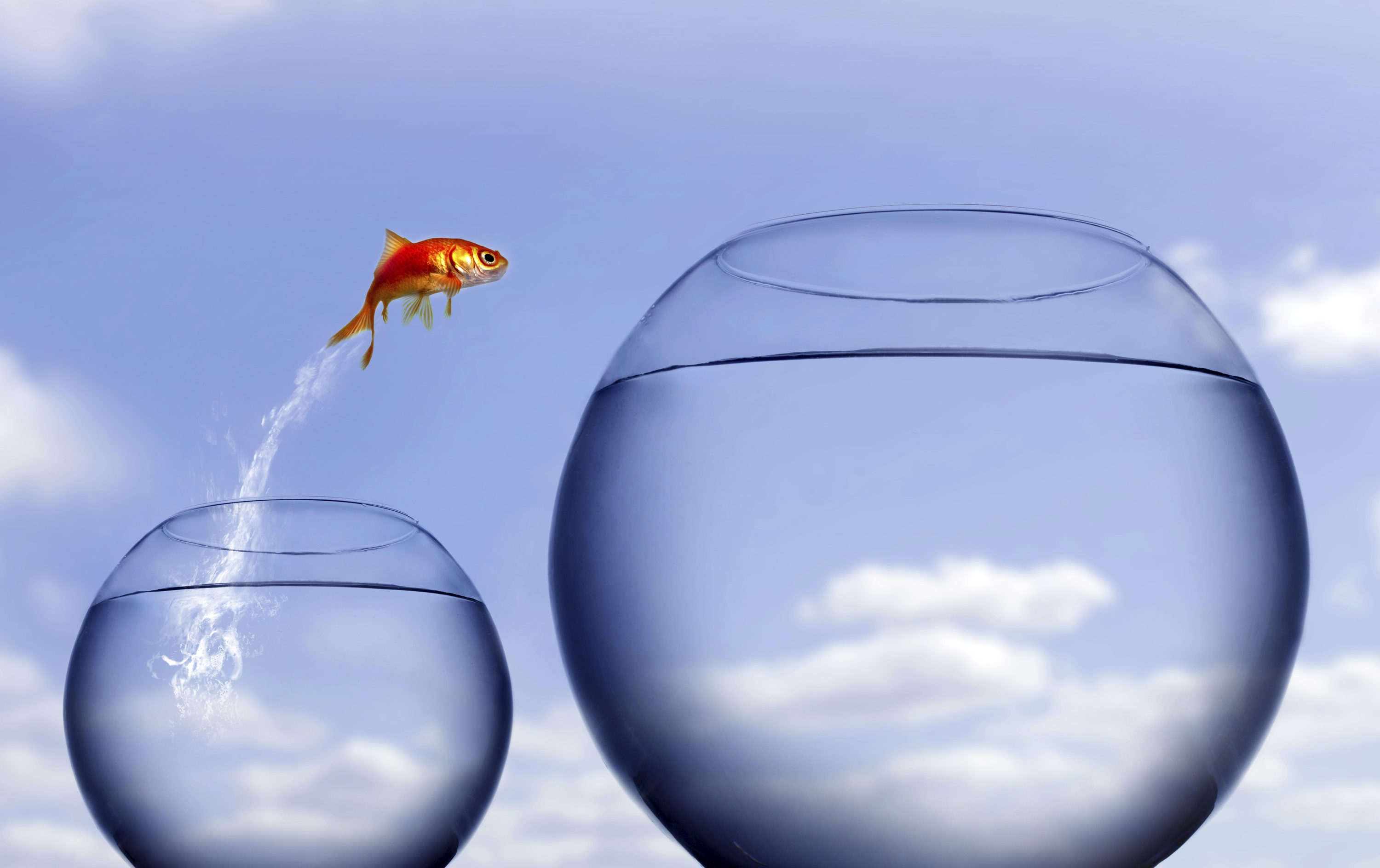 Image of a goldfish jumping out of a small bowl into a bigger bowl